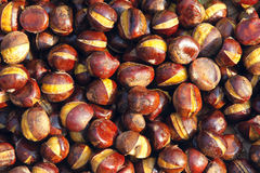 Chinese chestnut Royalty Free Stock Photos