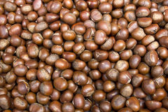 Chinese Chestnut Stock Images