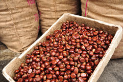 Chinese chestnuts in foam box and three bags Royalty Free Stock Photos