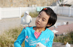 Chinese child with pigeon Royalty Free Stock Photography