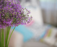 Chinese Chive Royalty Free Stock Photography