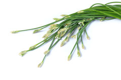 Chinese Chive Royalty Free Stock Image
