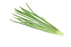 Chinese chive in a white background. Picured Chinese chive in a white background stock photo
