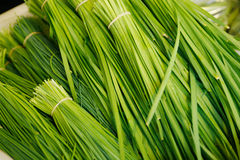 Chinese Chives Stock Photography