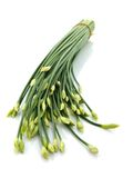 Chinese Chives Royalty Free Stock Images