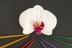 Chinese chopsticks and orchid flower Royalty Free Stock Photography