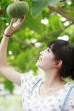 Chinese city girl in garden. Chinese city girl enjoying the growth of melon in farmhouse garden royalty free stock photos