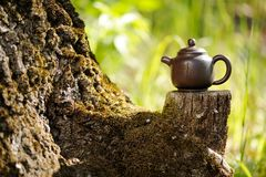 Chinese clay teapot on old wooden stump with moss on bright gree Stock Images