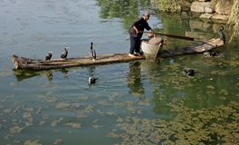 Chinese cormorant fisherman Stock Images