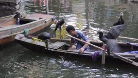 Chinese cormorants on boat stock footage