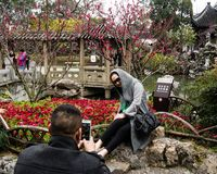 Chinese couple taking pictures in Lion Grove garden in Suzhou. Suzhou, China - March 23, 2016: Visitors taking pictures with cherry blossoms in Lion Grove garden stock photo