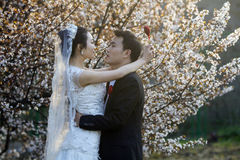 Chinese couple wedding portraint in front of cherry blossoms Stock Image