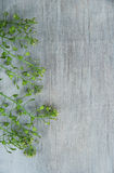 Chinese cress on wooden background. Chinese cress Capsella herb on wooden background Stock Image