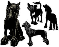 Chinese Crested. Collection of dog breeds Chinese Crested vector Stock Images