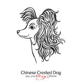 Chinese Crested Dog. Black and white graphic drawing of a dog. Vector illustration Royalty Free Stock Images