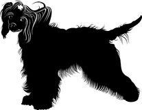 Chinese Crested dog . dogs. Chinese crested breed,black and white vector picture isolated on white background. Chinese Crested dog. dogs. Chinese crested breed Royalty Free Stock Photography