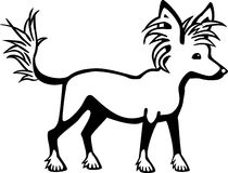 Chinese Crested Dog. Stylized illustration a chinese crested dog Royalty Free Stock Photos