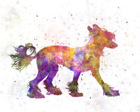 Chinese crested dog in watercolor Royalty Free Stock Images