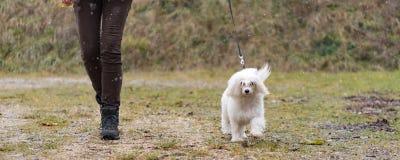 Chinese Crested-Hundepulver-Hauch-Hundeführer, der mit Hund in den Schneefällen im Winter geht lizenzfreie stockfotografie