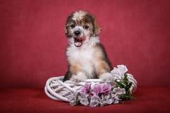Chinese Crested-Hundewelpe auf einem weißen Kranz mit Blumen Stockfotos
