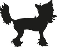 Chinese crested silhouette. Dog Chinese crested silhouette vector Royalty Free Stock Image