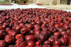 Chinese Date Fruits Royalty Free Stock Image