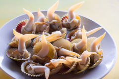 Chinese dish: clam. This is a kind of Chinese clam,  we Chinese like fresh clam, before we eat, it must be alive. To cook it is quite simple. just put it into Royalty Free Stock Photos
