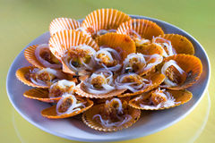 Chinese dish: scallop. Usually we Chinese cook scallop is the following way:1. to barbecue it or to steam it Royalty Free Stock Images