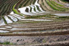 Chinese Dragon Backbone Terraces Royalty Free Stock Images