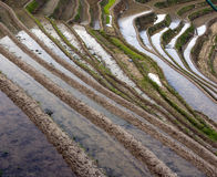 Chinese Dragon Backbone Terraces Stock Image