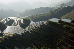 Chinese Dragon Backbone Terraces Stock Images