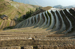 Chinese Dragon Backbone Terraces Royalty Free Stock Image