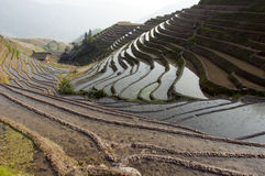 Chinese Dragon Backbone Terraces Stock Photos