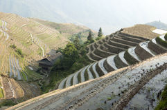 Chinese Dragon Backbone Terraces Royalty Free Stock Photo