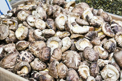 Chinese dried mushrooms Royalty Free Stock Image