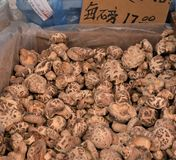 Dried Mushrooms stock images