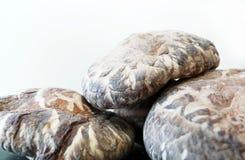 Chinese dry shitake mushroom Stock Photos