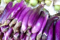 Chinese Eggplant, Solanum melongena Royalty Free Stock Image