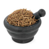 Chinese Ephedra Herb Stock Photo