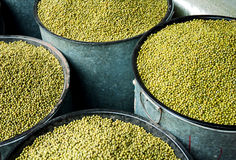 Chinese farm produce. Mung bean in Sichuan produce market ,west of China Royalty Free Stock Images