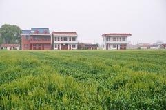 Chinese farm Stock Image