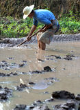 Chinese farmer. A Chinese farmer is working in the water field.Though China is growing stronger,some areas are still in poor,especially the rural area.Place Stock Image