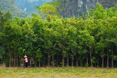 Chinese farmer. Carrying bamboo baskets Stock Image