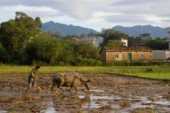 Free Chinese Farmer Farming In Summer Season Stock Photography - 191166172