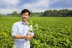 Chinese farmer holding sapling Stock Photos