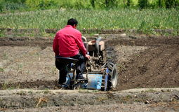 Pengzhou, China: Farmer Plowing Field Stock Image