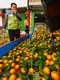 Chinese farmer, smoke break near oranges washing and waxing mach Stock Photography