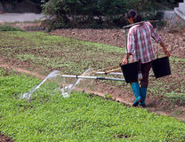 Chinese farmer watering vegetables. Chinese farmer watering vegetable with traditional method Royalty Free Stock Photography