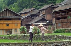 Chinese farmers going to work through rice terrace Stock Images