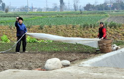 Chinese Farmers Working in Field Royalty Free Stock Images